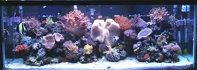 San Diego Reef Forums  sdreefscom