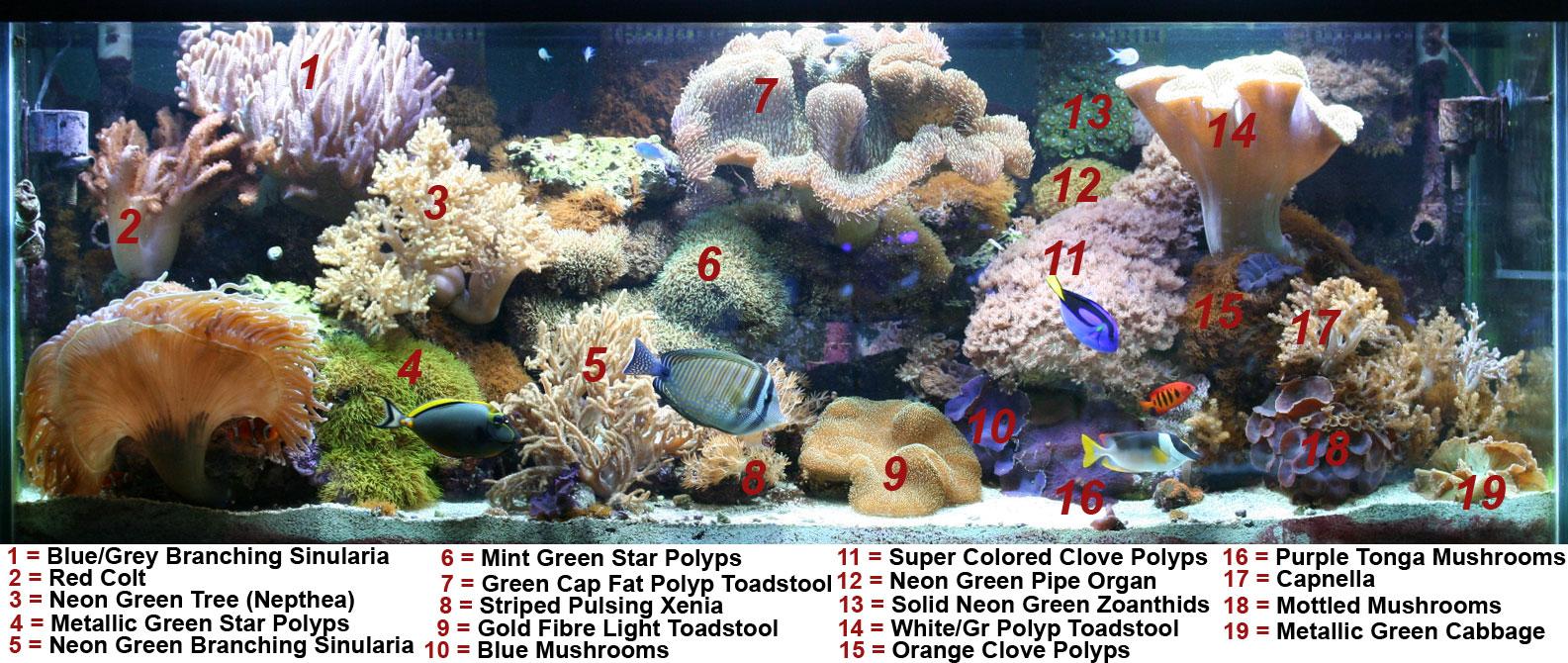 green fibre light toadstool soft coral tank raised soft