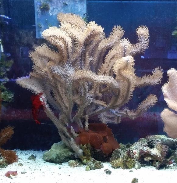 Gorgonian Aquarium