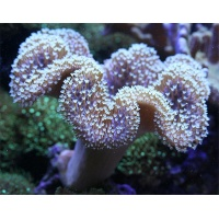 parent-toad-whpolyp